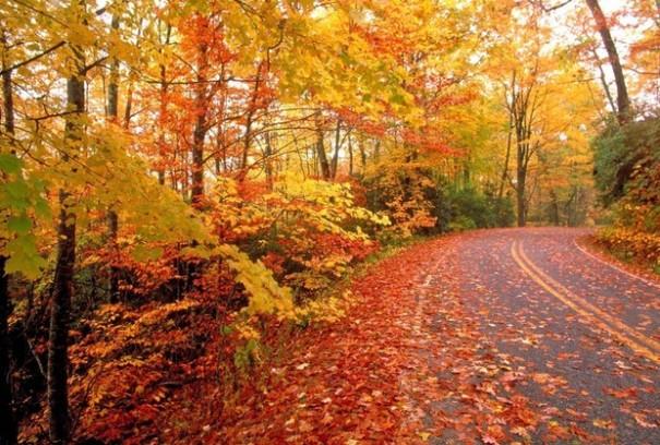 fall-foliagejpg-8ba941f8073381fc